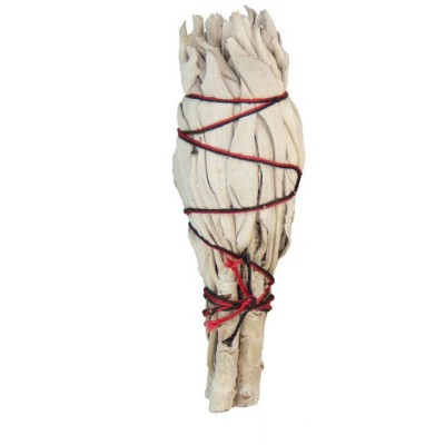 SAUGE CALIFORNIE BLANCHE MINI