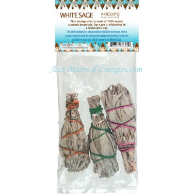 SAUGE CALIFORNIE BLANCHE MINI PK3